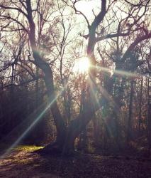 3rd December .... Evalyn's Tree